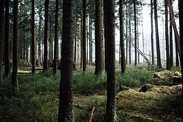 Mystischer Harzer Nadelwald van Oliver Henze