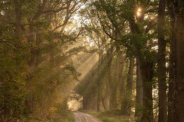 zonneharpen in het bos van ina van zandwijk