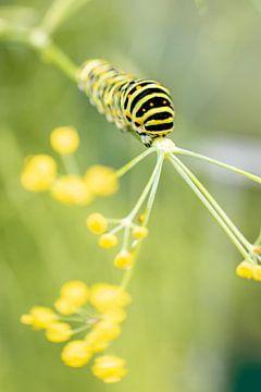 Von der Raupe zum Schmetterling   Kunstdruck   Green World von Gabry Zijlstra