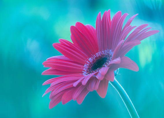 Pink Gerbera van bird bee flower and tree