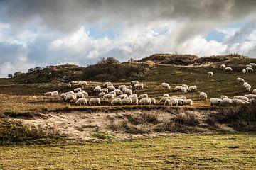 Kudde schapen in hollandse duinen met dramatische lucht van MICHEL WETTSTEIN
