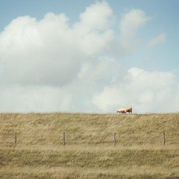 Hollands beeld sur Foto NVS