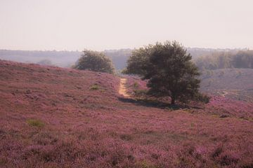 Märchenhafte lila Heide (Morgen) von PPS Fotografie