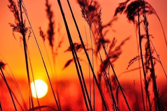 Achterhoekse zonsondergang bij de Oude IJssel van Arno Wolsink