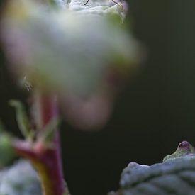 Creepy Fly van Robert Kersbergen