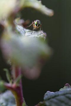 Creepy Fly