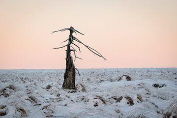 Verbrande boom in sneeuwlandschap bij zonsopkomst van Michel Lucas