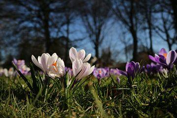 De lente komt eraan! van Lianne van Dijk