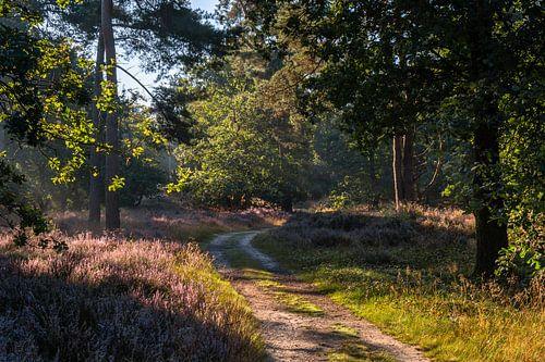 Sunlit Heather Path van William Mevissen