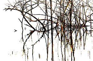 Riet in de polder