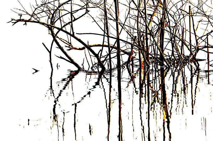 Riet in de polder van Yvonne van Dormolen