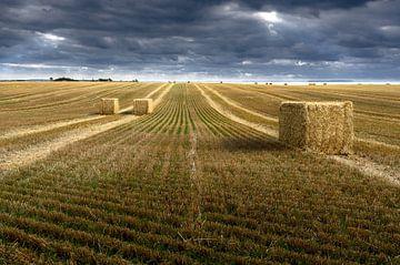 Grasveld van Denemarken van YesItsRobin