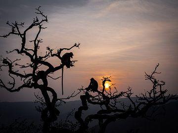 Silhouetten in den Bäumen von Rik Pijnenburg