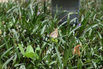 Papillon sur une plante sur Jaymi Hollander