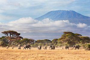 Afrikaanse olifanten (Loxodonta africana) kudde met de Kilimanjaro van