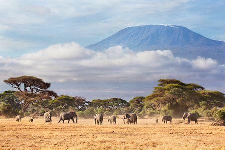 Afrikaanse olifanten (Loxodonta africana) kudde met de Kilimanjaro