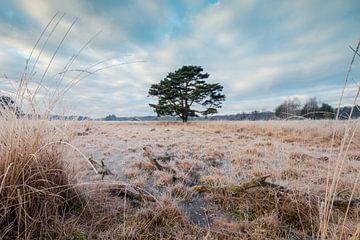 Der Baum von Max ter Burg Fotografie
