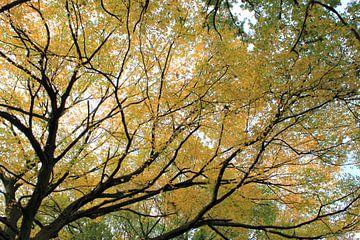 Gouden bladeren van Roger Hagelstein