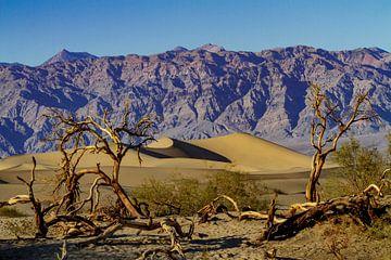Mesquite Flat Dunes in Death Valley van