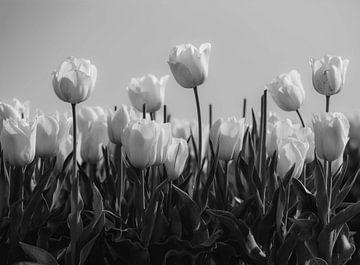 Tulpen in Schwarz und Weiß von Martine Moens
