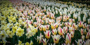 Tulpenbed van C.T. Lam