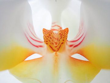 Hart van de orchidee sur Dagmar van Nieuwpoort