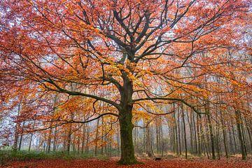 Vurige herfst van Tvurk Photography