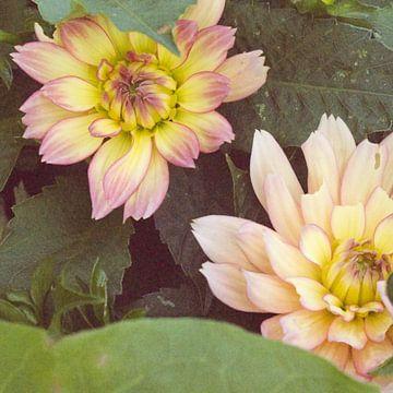 Farbkräftige Blumen von Wilma Rodionow