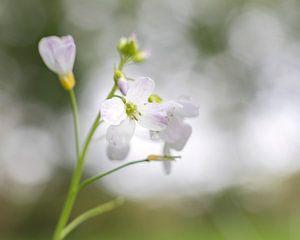 Fragiel bloempje met bokeh