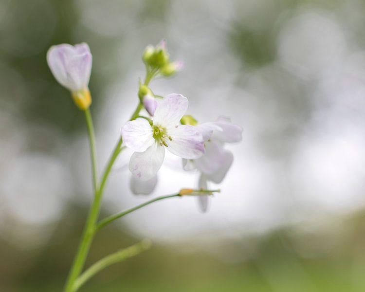 Fragiel bloempje met bokeh van Jacqueline de Groot