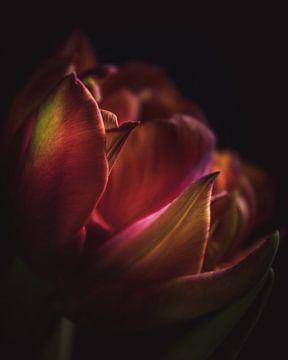 Farbenfrohe Dunkelheit von Sandra Hazes