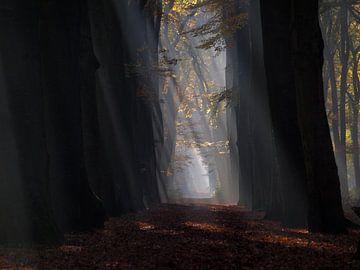 Zonnestralen door het Hoekelumse Bos [totaal] (Ede, Nederland) van Ben Nijenhuis