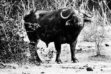 Afrikaanse Buffel zwart-wit van Dexter Reijsmeijer