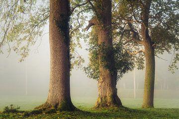 The tree Musketeers van Joris Pannemans - Loris Photography