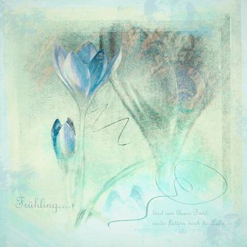 Frühling lässt sein blaues Band.. - Krokusse im Frühling von Annette Hanl