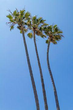Les palmiers en été sur Melanie Viola
