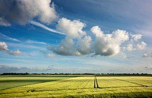 Ruimte in de polder