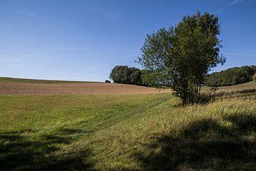 Landschap in Lof met bomen von Jaap Mulder