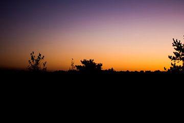 zonsopgang in het bos von daan van den heuvel