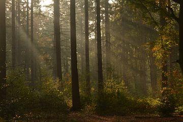 Zonnestralen in bos in de herfst van
