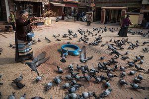 Etenstijd voor de duiven van Photolovers Reisfotografie