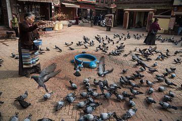 Tauben auf einem Platz in Kathmandu bekommen Futter | Nepal von Photolovers reisfotografie