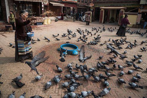 Duiven op een plein in Kathmandu krijgen eten | Nepal
