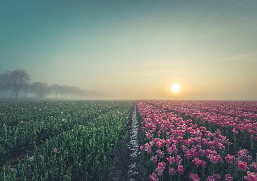 Tulpenvelden net na de zonsopgang. van Tomasz Baranowski