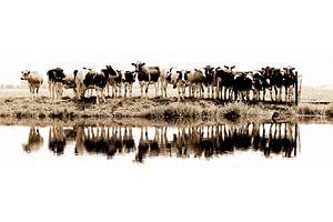 Kühe in einer Reihe (Sepia) - gesehen bei vtwonen