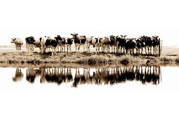 Kühe in einer Reihe (Sepia) - gesehen bei vtwonen von Annemieke van der Wiel