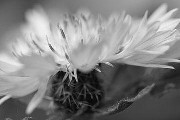 Nahaufnahme einer  Blume am Strassenrand in Schwarz-Weiss von Charlotte Serrarens