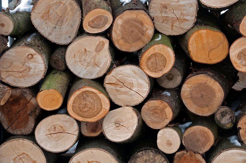 boomstammen van Compuinfoto .