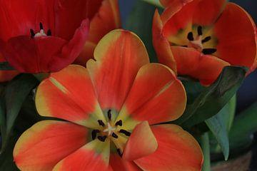 tulpen van nataschja van der Woude-de Jong