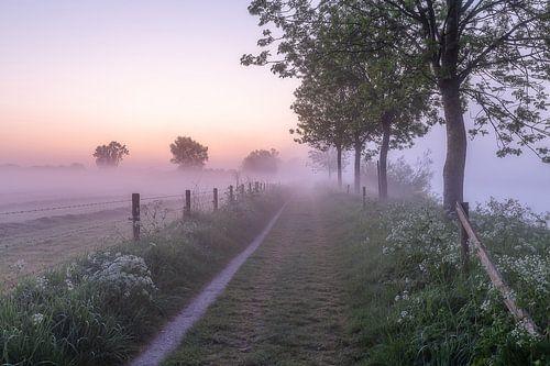 Voyage dans la rosée lors d'une matinée brumeuse le long de la Lys à Wevelgem